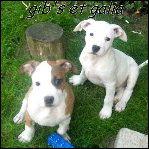 Gib's & Galia