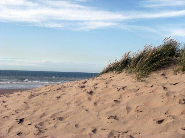 Petit coin de dunes.