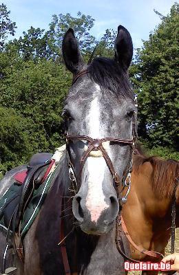 mon cheval double charme