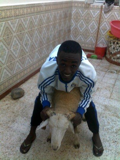 moi et le mouton