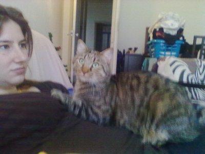 mon chat et mon ventre
