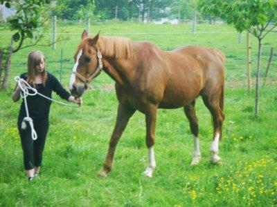 je vous présente le cheval de ma nièce