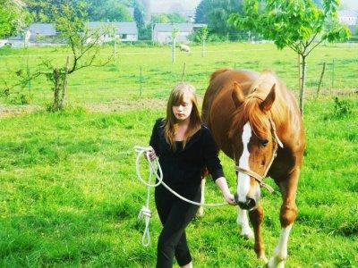 encore le cheval de ma nièce alison