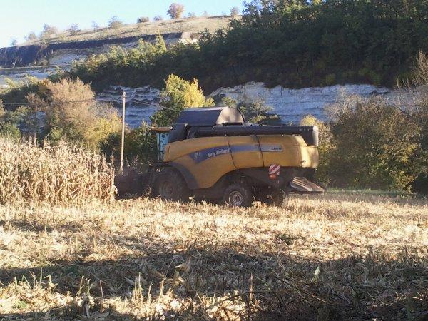 Moisson du maïs 2011 avec une New Hollande cx8090