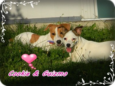 Cookie&Cannelle♥