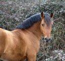 Photo de X-Horse-Photography-X