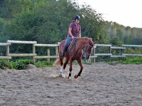 « N'oubliez pas que le cheval de votre vie est sûrement plus compliqué que ce que à quoi vous vous attendiez. Il vous fera rire et pleurer, abandonner et réessayer, aller d'échec en échec, de réussite en réussite. Le cheval de votre vie vous fera passer par toutes les émotions possibles, du stress à la fierté, de l'angoisse au bonheur, il vous fera passer du plus bas, au plus haut.»