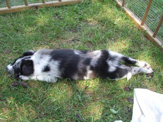La sieste dans le jardin.