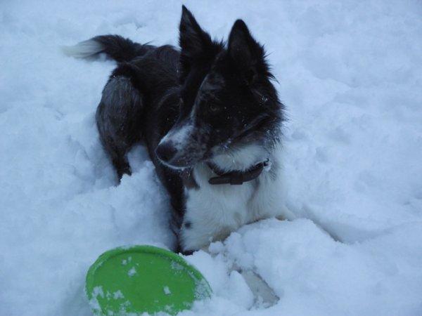 La tahoua dans la neige !
