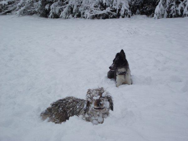 Avec les Z'amis dans la neige  !