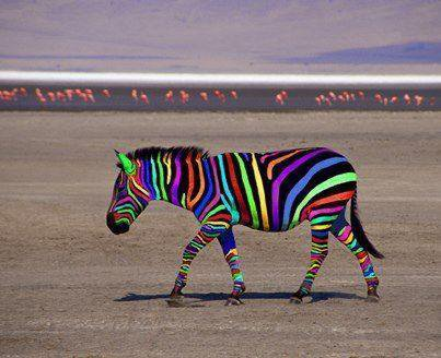 Un zebre juste normal.