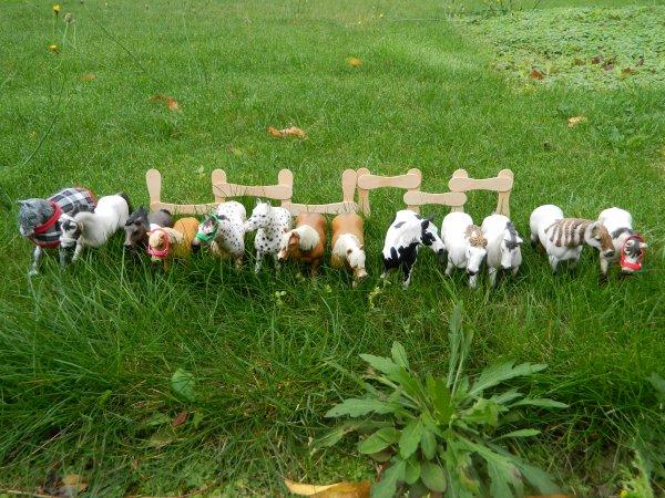 Nos doubles poneys : Kenzo, Oléo, Feeling, Elta, Kidam, Olive, Natif, Jonquille, Viva Bella, Dépona, Orphéo, Kiss-me, Espion.,