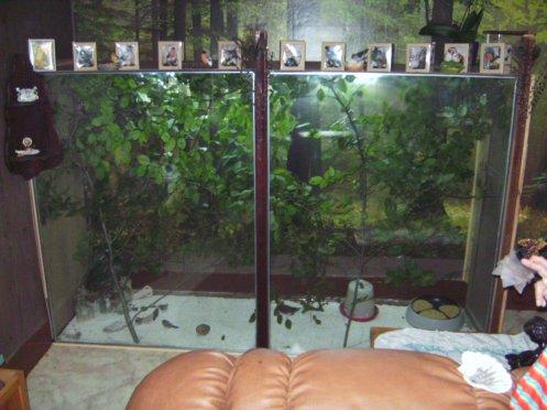 Vollière dans mon salon