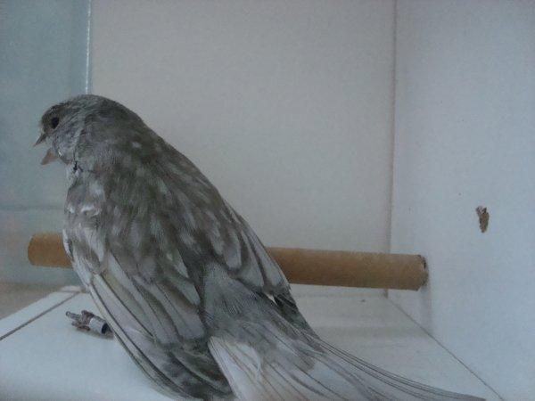 alas gris de azul dominante 2009 primer puerto en el argentino