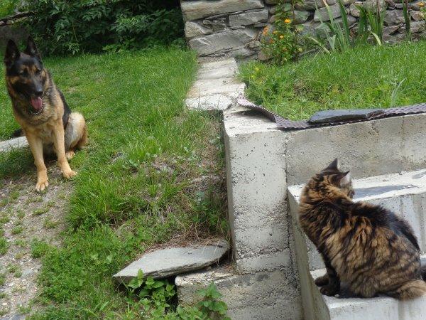 09/08/14:  Ballade autour de la maison avec Cosak