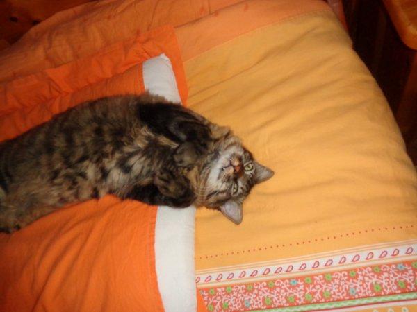 29/08/14: Laisse moi dormir !!