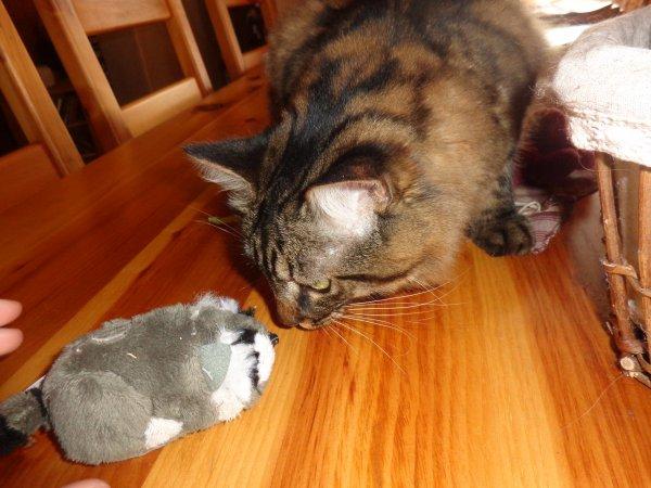 01/09/14 :  Il redécouvre ses jouets ! *-*