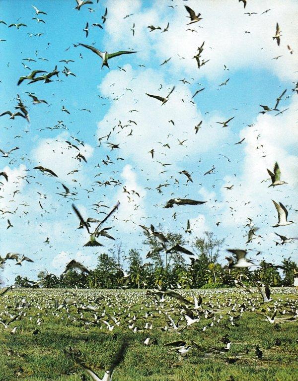 UMBRINA 2 - SEYCHELLES - ÎLE DE BIRD ISLAND