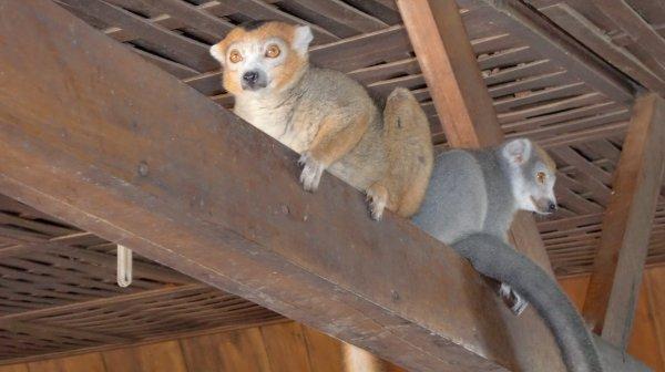 """MADAGASCAR - DIEGO-SUAREZ - RESTAURANT """"5 TROP PRES"""" - MAKIS - (Février 2011)"""