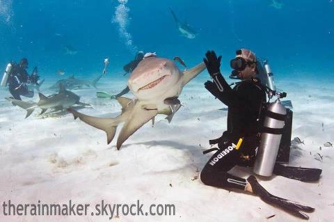 Les Humain Sont Comme Ces Requins, il Suffit De Savoir Comment Jouer Avec Eux