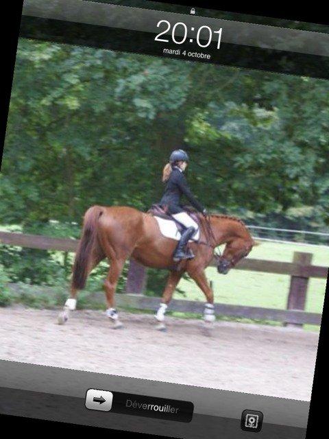 moi et mon nouveau cheval :)<3 au concours :)
