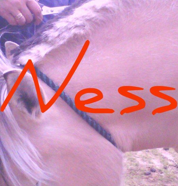 Les crins de Ness