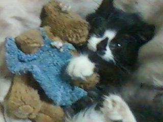 mon petit chat Théodore