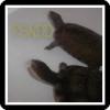 PSNDD
