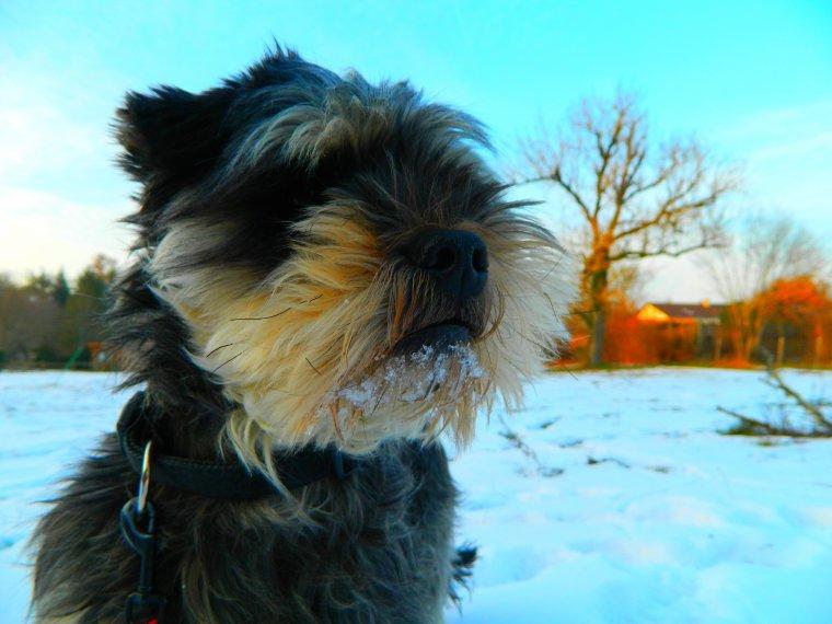 J'aime la neige.