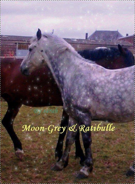 """- Moon Grey ♥ - C'est quand les corbeaux seront blanc, et la neige sera noir; que ton nom s'effacera de ma mémoire . ♥ """"Moon-Grey"""", une étoile qui brille fort dans le ciel depuis une Merveilleuse journée d'un 28 Octobre 2009..."""