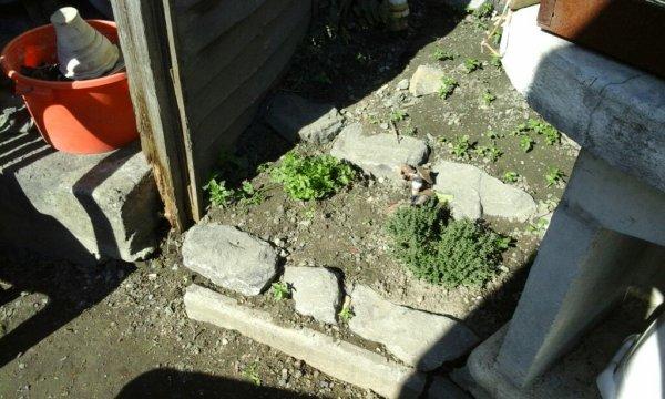 Moi jardin