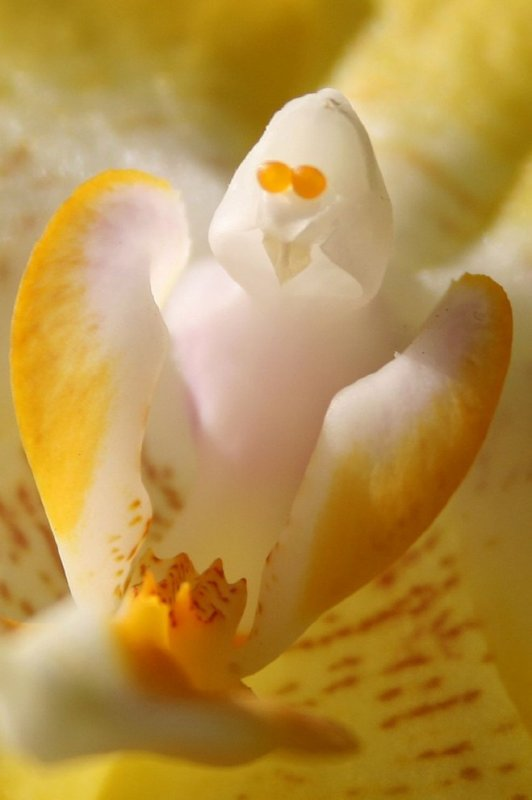 Orchidées  série 2