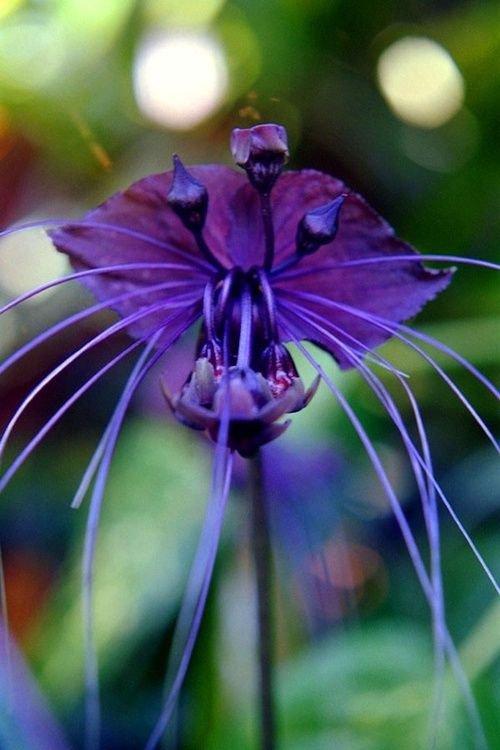 Orchidées  série 3