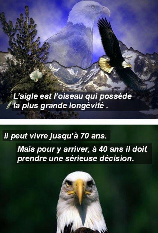 La nature nous donne des leçons..!