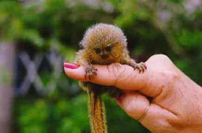 le petit singe de doigt...suite ..!