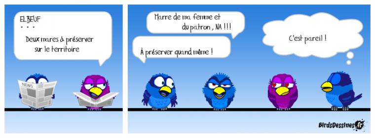 les ptis bleus