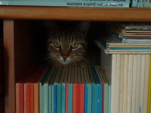Je cherche mon  chat Avez vous vue Timy????? regarder sa planque il veille sur la collection