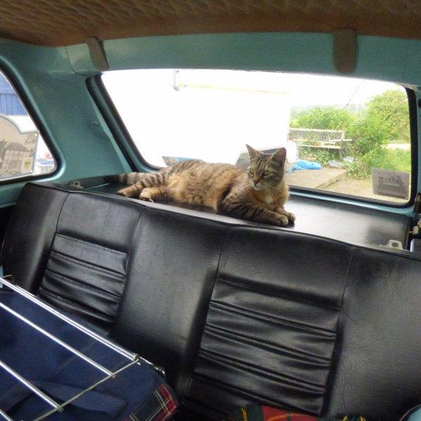 J ai un clandestin  dans ma Renault 5 LOL