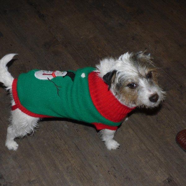 Voici le chien de l animatrice je craque il est trop choux dans son pull.............Regarde genevieve j ai penser a toi en le voyant