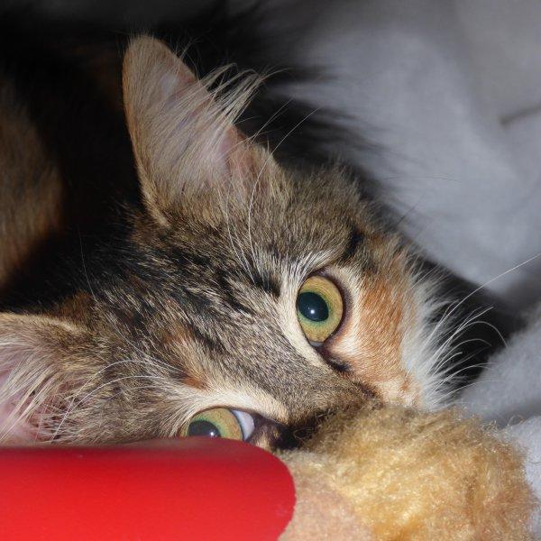 voila mon  sapin squatter par notre amie Sucette............Le chat de mon fils