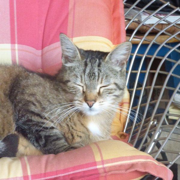 Timy   adorent les fauteuils  Bertoia Knoll...........BONNE SOIREE  BISOUS  DE LA BRETONNE