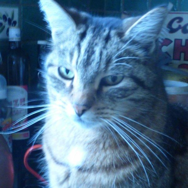 Voii des photos de mon fugeur;;;;;;;;;;;;;;;;;;;;;;;;;;;;;mon  chat timy avec   son periple de 3 jours il na pas maigri