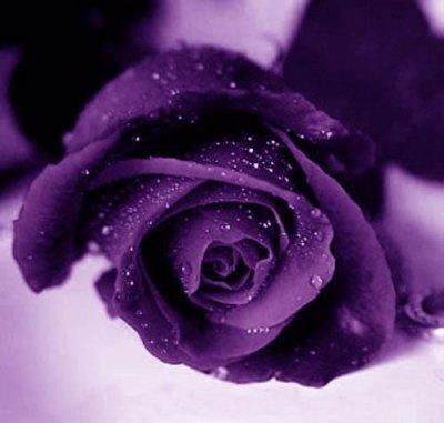 Hooooooooo Quelle Splendeur Rose Violette Magnifique Sud