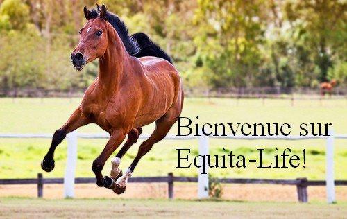 Bienvenue sur Equita-Life!
