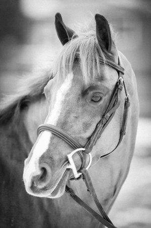 Les bases de l'équitation n°1