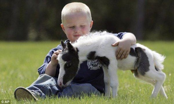 Les Falabellas, les plus petits chevaux du monde!