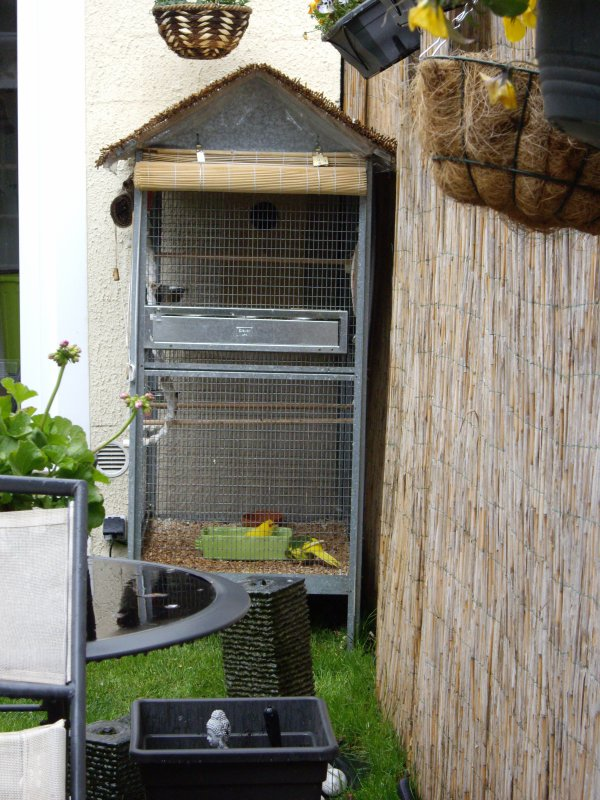 Apres les canaris voici les kakariki