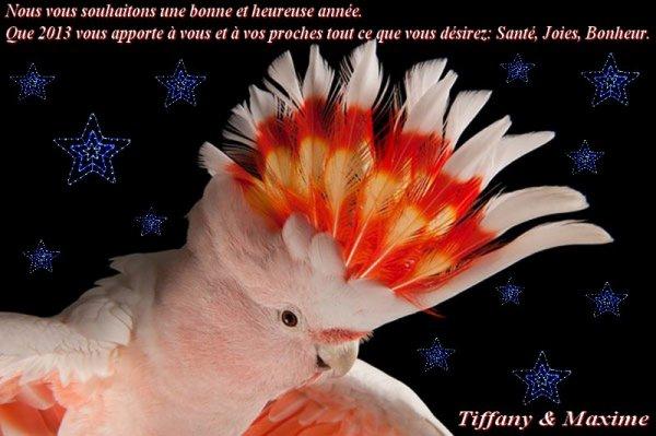 Nous vous souhaitons Meilleurs voeux pour 2013