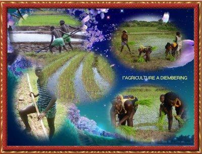 "L ""AGRICULTURE EN CASAMANCE ET LE BAR RESTAURENT ALBERT SAMBOU"