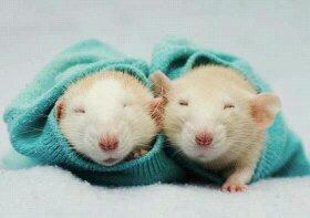 Ohhhhhhhh so cute